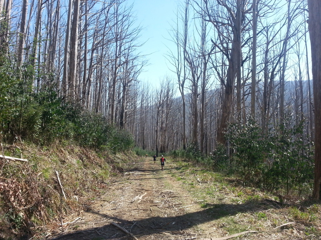 Taggerty River fire trail